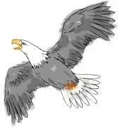 416-EAGLE