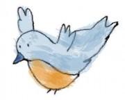 448_bluebird