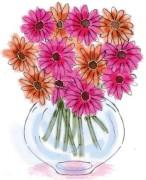 459_gerber-daisies