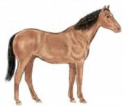 578HORSE