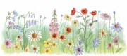 592wildflowers