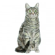 CAT1WEB