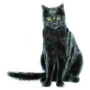 CAT3WEB
