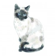 CAT5WEB