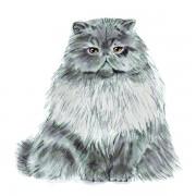 CAT6WEB